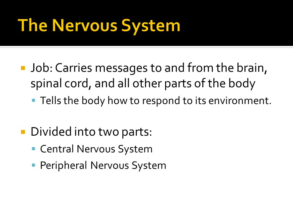  Job: Carries messages to and from the brain, spinal cord, and all other parts of the body  Tells the body how to respond to its environment.