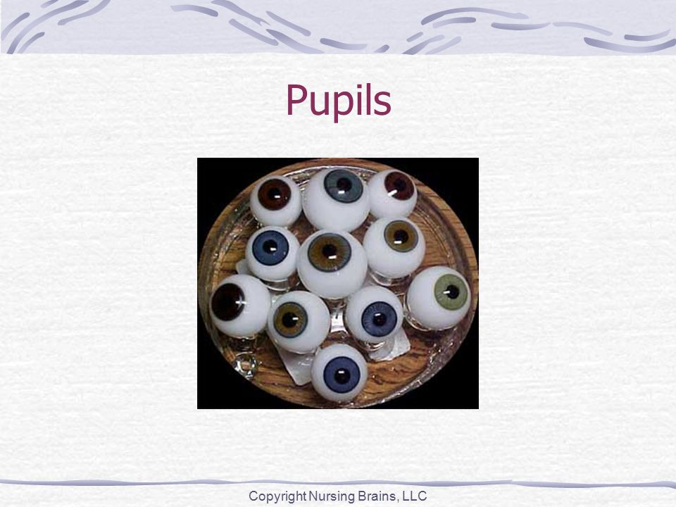 Pupils Copyright Nursing Brains, LLC