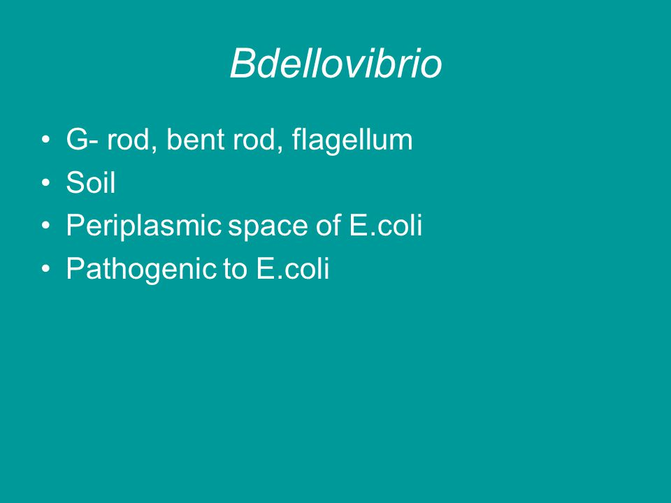 Bdellovibrio G- rod, bent rod, flagellum Soil Periplasmic space of E.coli Pathogenic to E.coli
