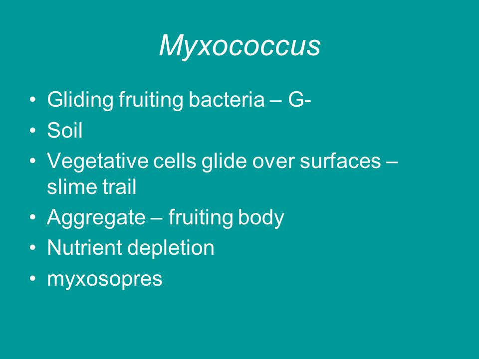 Myxococcus Gliding fruiting bacteria – G- Soil Vegetative cells glide over surfaces – slime trail Aggregate – fruiting body Nutrient depletion myxosopres
