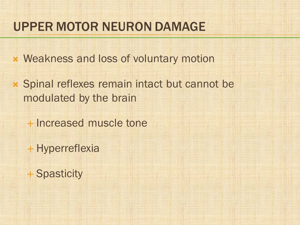 UPPER MOTOR NEURON DAMAGE  Weakness and loss of voluntary motion  Spinal reflexes remain intact but cannot be modulated by the brain  Increased mus