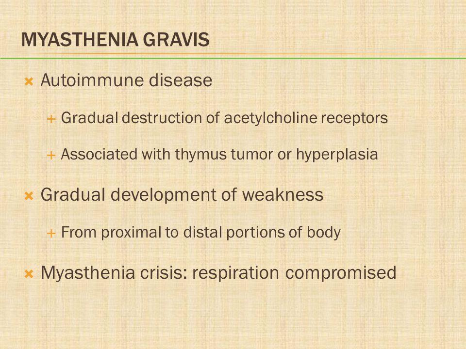 MYASTHENIA GRAVIS  Autoimmune disease  Gradual destruction of acetylcholine receptors  Associated with thymus tumor or hyperplasia  Gradual develo