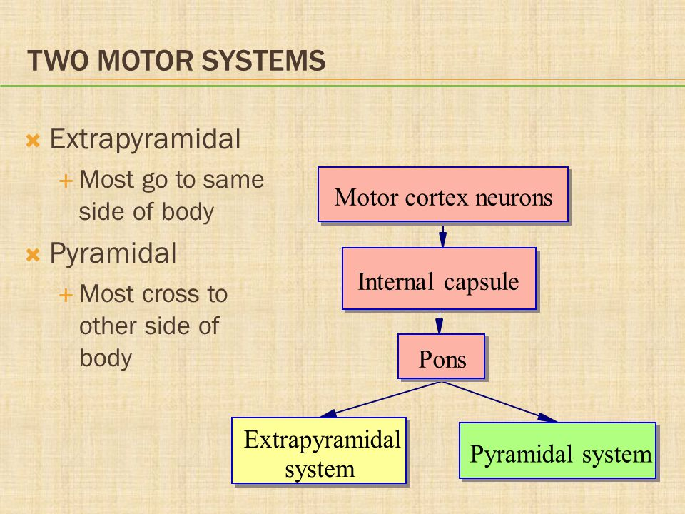 TWO MOTOR SYSTEMS  Extrapyramidal  Most go to same side of body  Pyramidal  Most cross to other side of body Motor cortex neurons Internal capsule