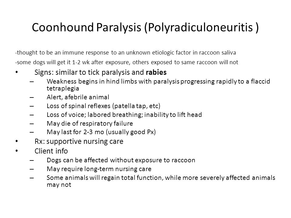 Coonhound Paralysis (Polyradiculoneuritis ) -thought to be an immune response to an unknown etiologic factor in raccoon saliva -some dogs will get it