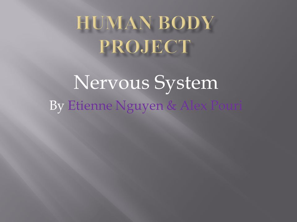 Nervous System By Etienne Nguyen & Alex Pouri