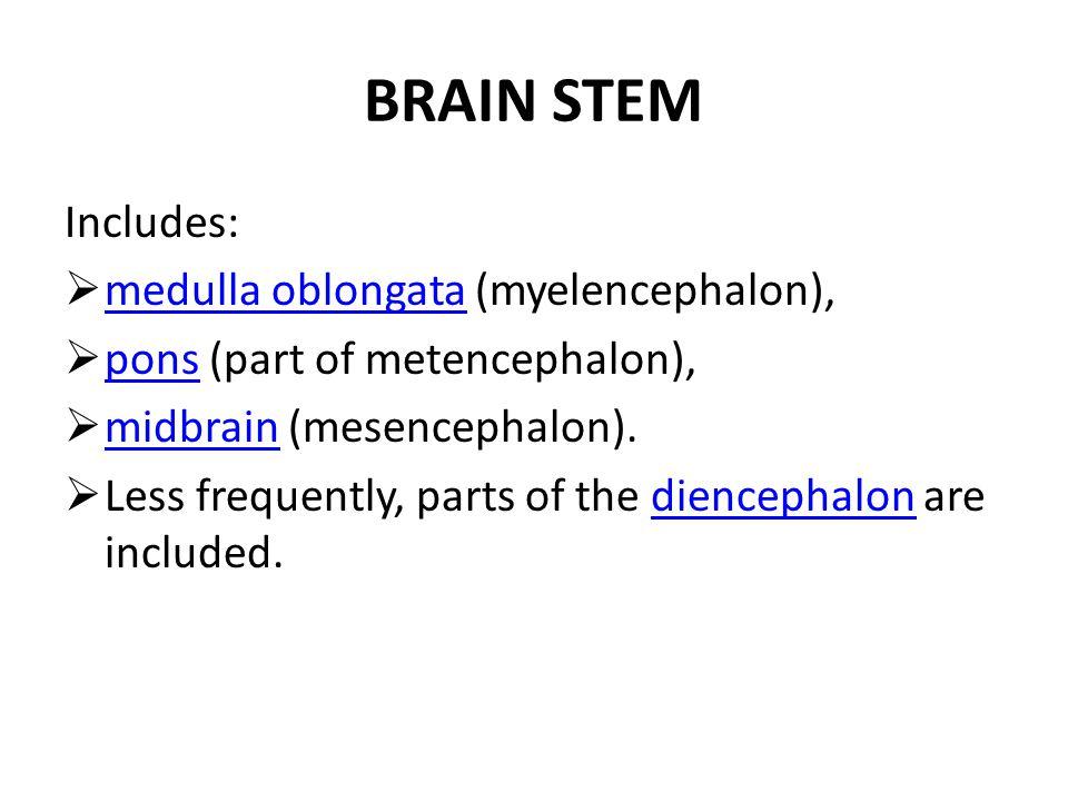 1.Cerebrum 2.Thalamus 3.Mesencephalon - Midbrain 4.Pons 5.Medulla oblongata 6.Medulla spinalis - Spinal cord