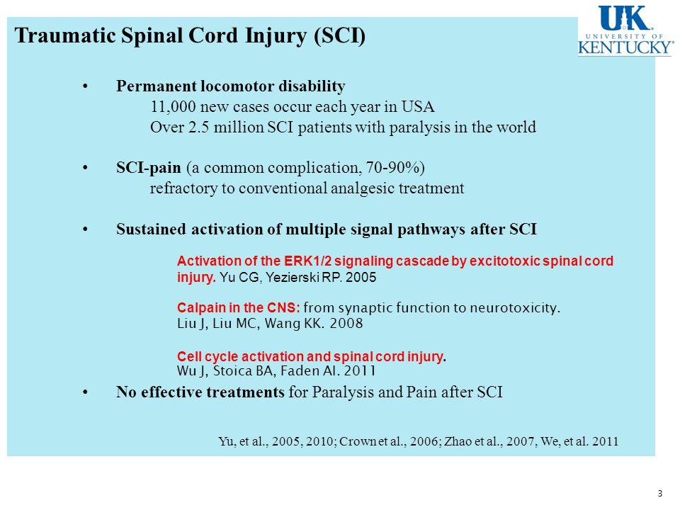 Traumatic Spinal Cord Injury (SCI) Permanent locomotor disability 11,000 new cases occur each year in USA Over 2.5 million SCI patients with paralysis in the world SCI-pain (a common complication, 70-90%) refractory to conventional analgesic treatment Sustained activation of multiple signal pathways after SCI No effective treatments for Paralysis and Pain after SCI Yu, et al., 2005, 2010; Crown et al., 2006; Zhao et al., 2007, We, et al.