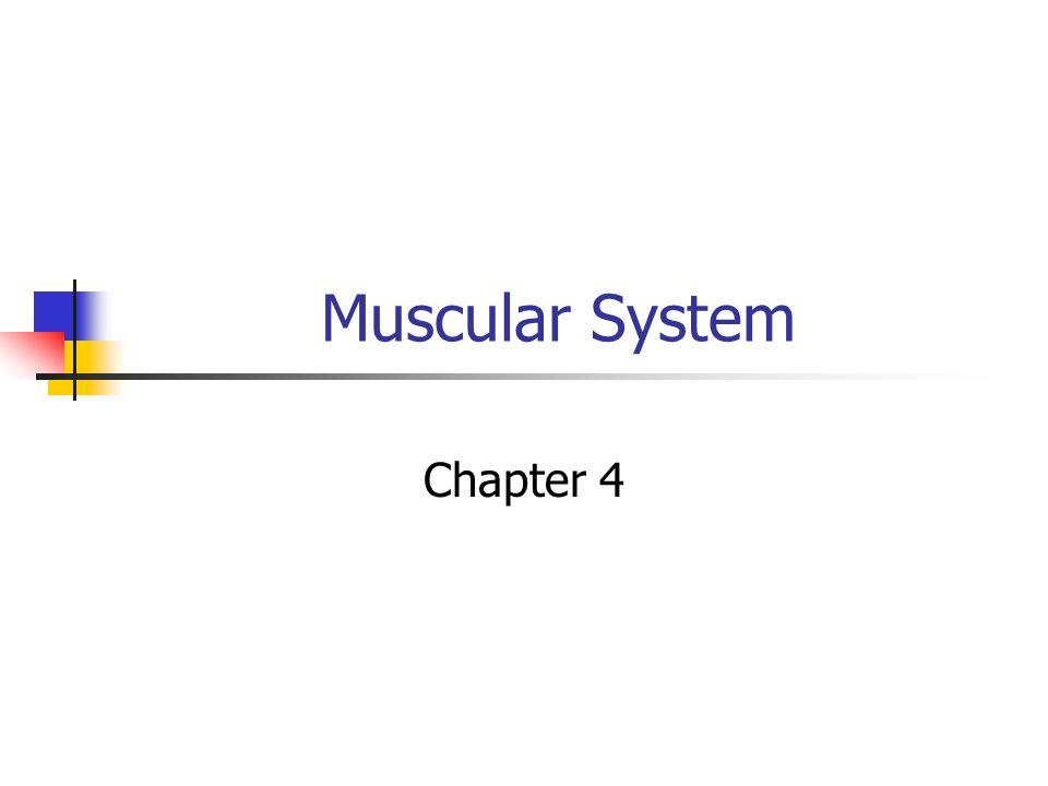 Muscular System Chapter 4
