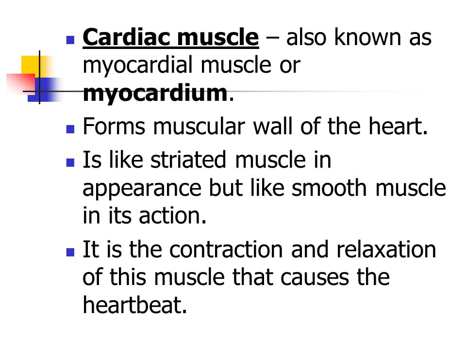 Cardiac muscle – also known as myocardial muscle or myocardium. Forms muscular wall of the heart. Is like striated muscle in appearance but like smoot