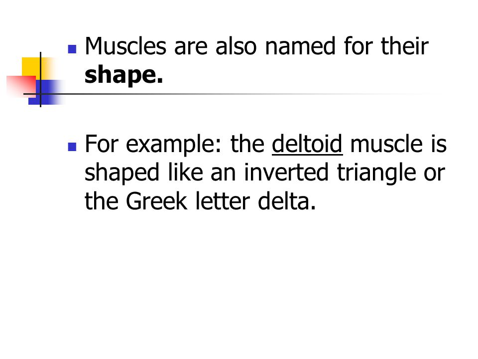 Muscles are also named for their shape. For example: the deltoid muscle is shaped like an inverted triangle or the Greek letter delta.