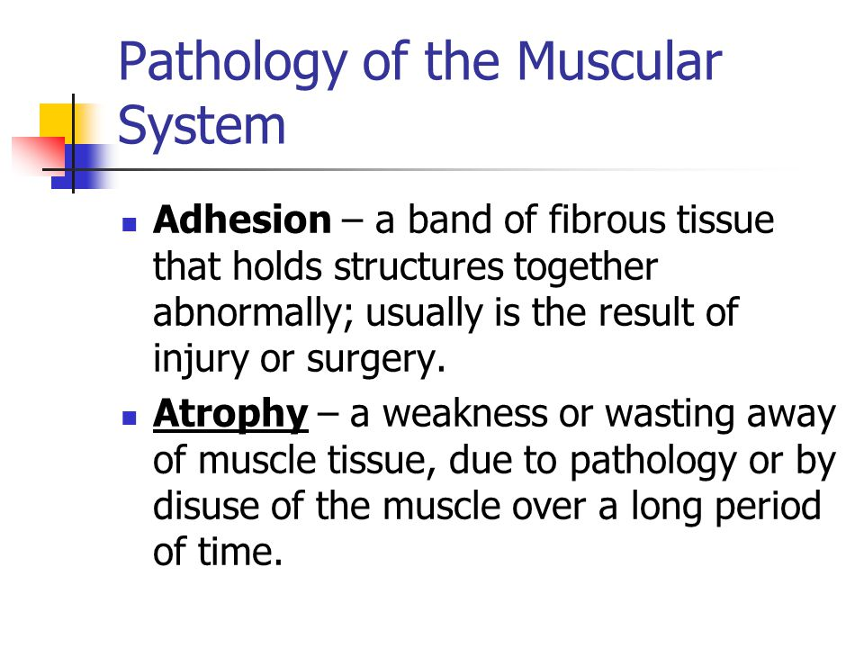 Pathology of the Muscular System Adhesion – a band of fibrous tissue that holds structures together abnormally; usually is the result of injury or sur