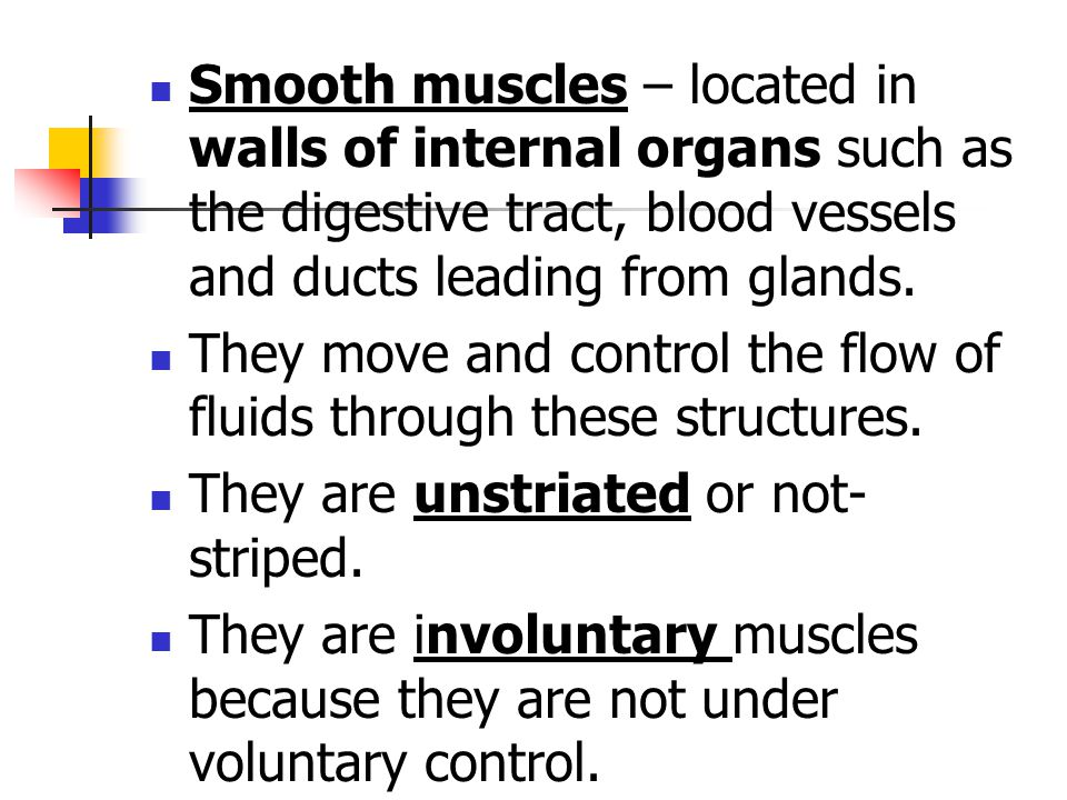 Smooth muscles – located in walls of internal organs such as the digestive tract, blood vessels and ducts leading from glands. They move and control t