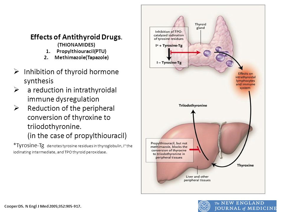 Effects of Antithyroid Drugs. (THIONAMIDES) 1.Propylthiouracil(PTU) 2.Methimazole(Tapazole)  Inhibition of thyroid hormone synthesis  a reduction in