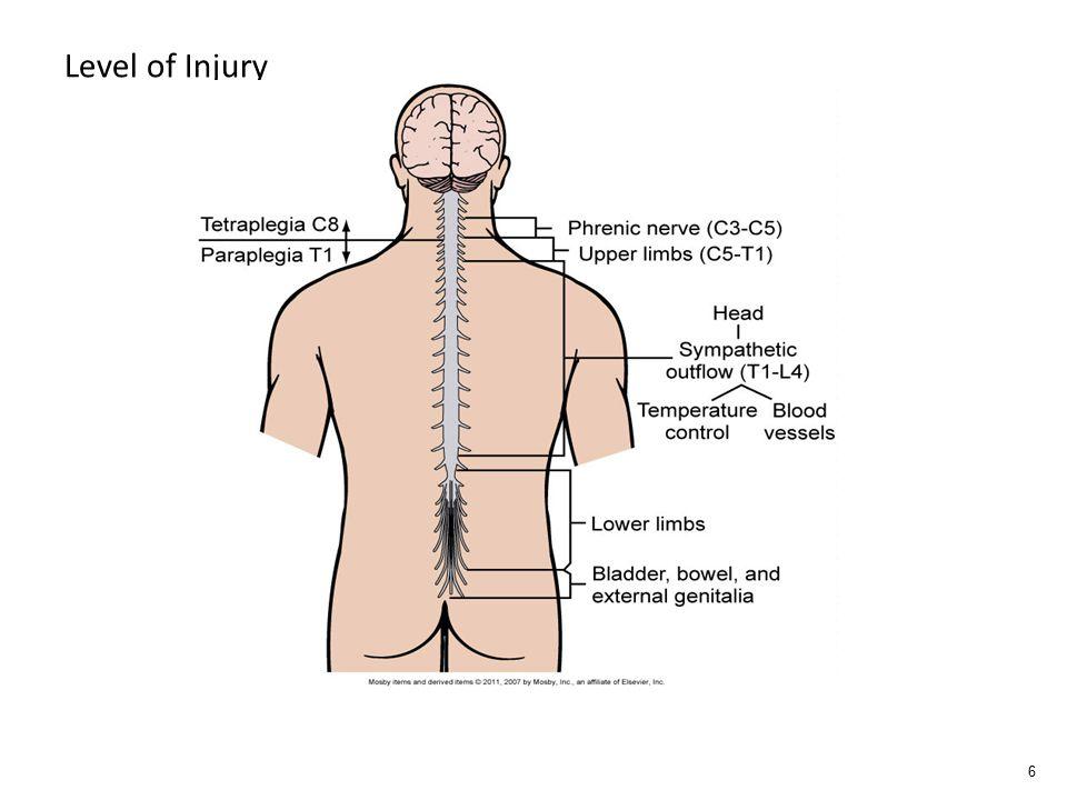 Level of Injury 6