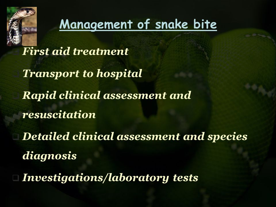 Management of snake bite  First aid treatment  Transport to hospital  Rapid clinical assessment and resuscitation  Detailed clinical assessment an