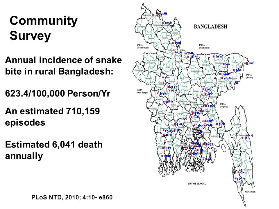 Annual incidence of snake bite in rural Bangladesh: 623.4/100,000 Person/Yr An estimated 710,159 episodes Estimated 6,041 death annually Community Sur
