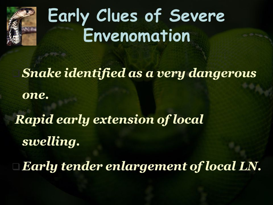 Early Clues of Severe Envenomation  Snake identified as a very dangerous one. Rapid early extension of local swelling.  Early tender enlargement of
