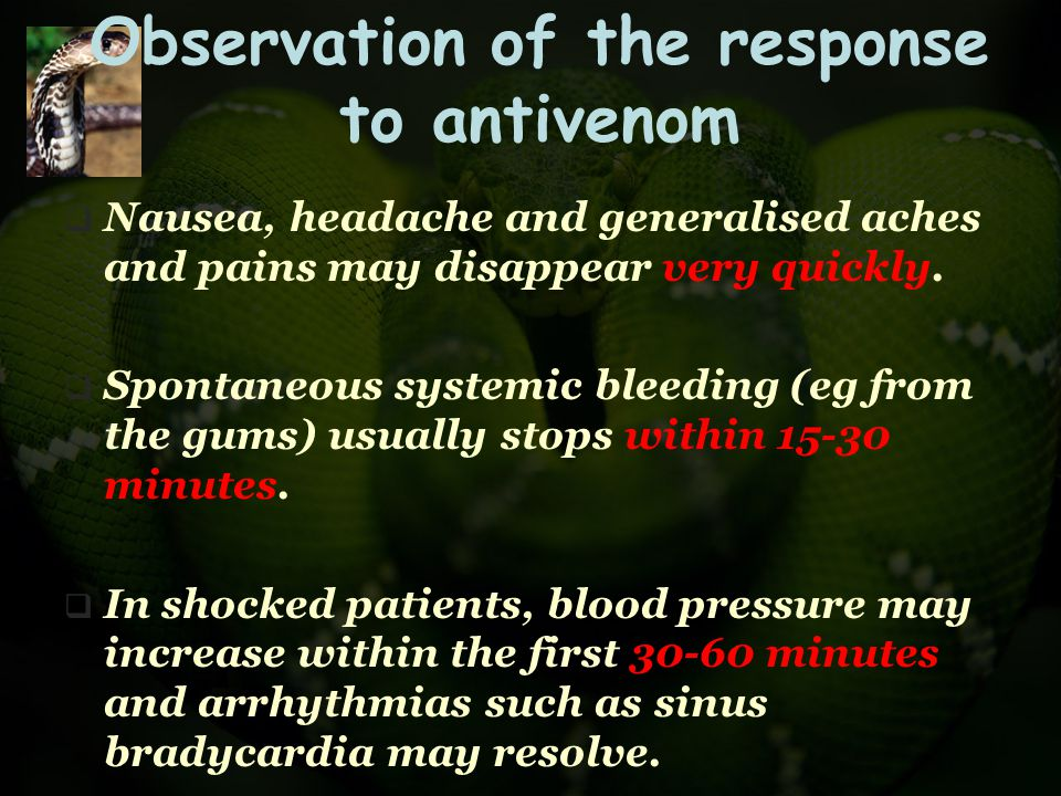 Observation of the response to antivenom  Nausea, headache and generalised aches and pains may disappear very quickly.  Spontaneous systemic bleedin