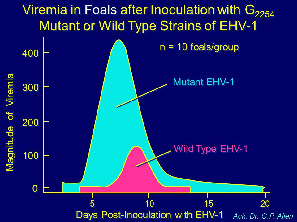 Viremia in Foals after Inoculation with G 2254 Mutant or Wild Type Strains of EHV-1 n = 10 foals/group Days Post-Inoculation with EHV-1 Magnitude of V