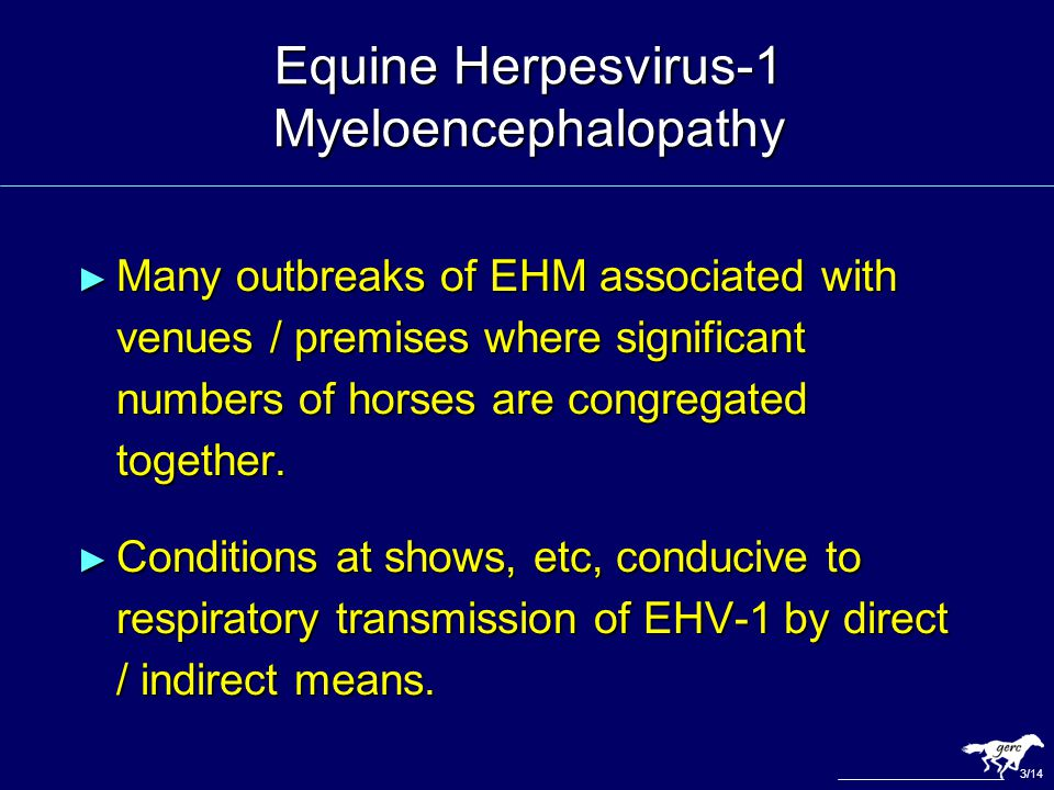 Equine Herpesvirus-1 Myeloencephalopathy ► Many outbreaks of EHM associated with venues / premises where significant numbers of horses are congregated