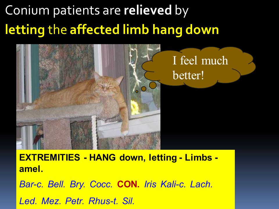 Conium patients are relieved by letting the affected limb hang down I feel much better.
