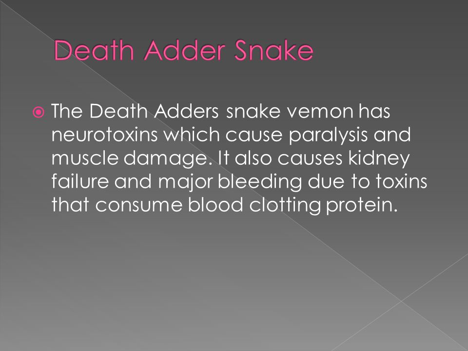  The Death Adders snake vemon has neurotoxins which cause paralysis and muscle damage.