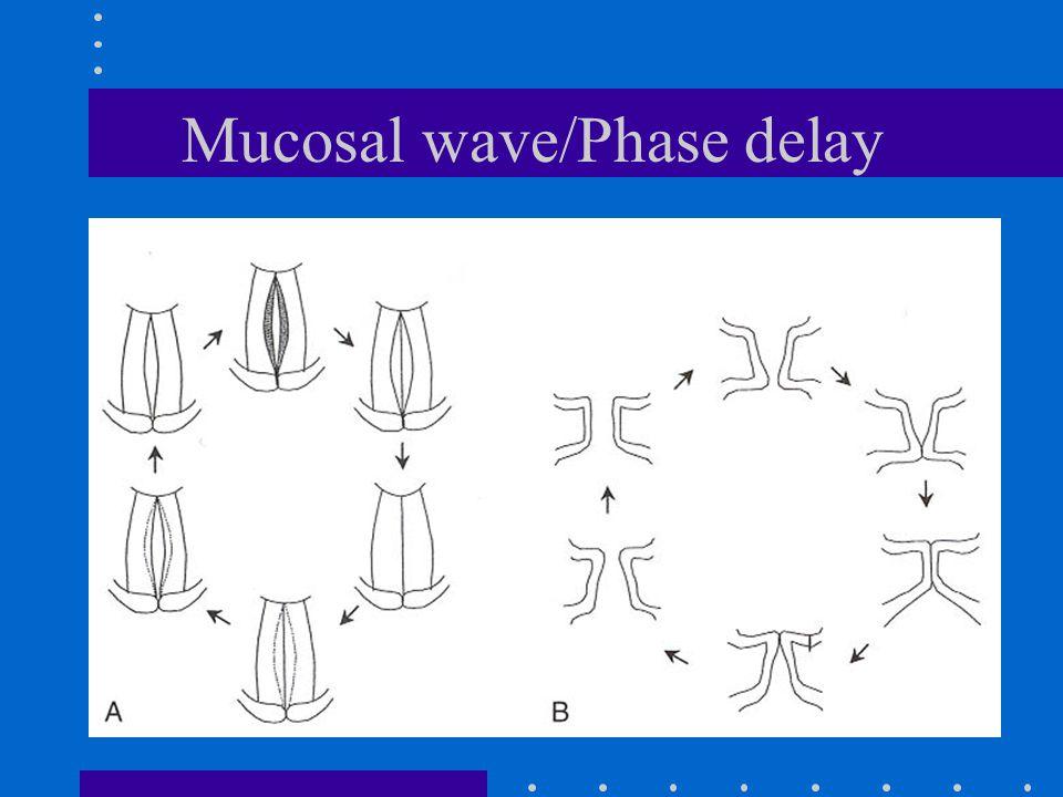 Mucosal wave/Phase delay