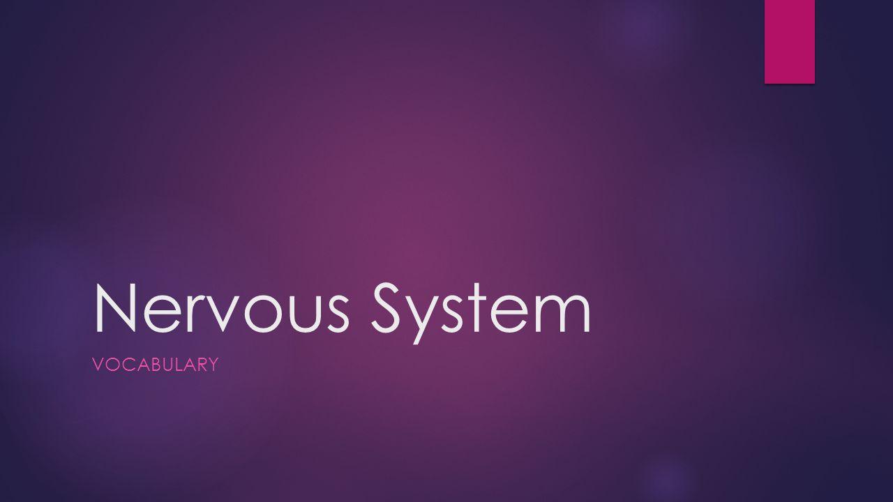 Nervous System VOCABULARY