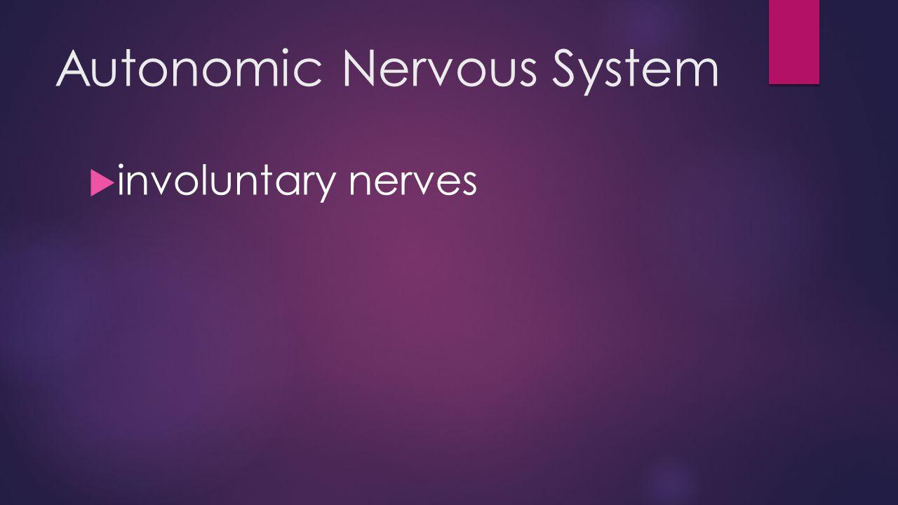 Autonomic Nervous System  involuntary nerves