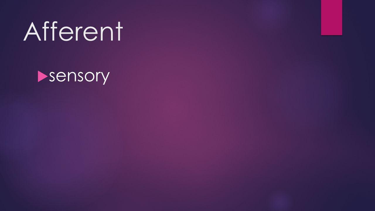 Afferent  sensory