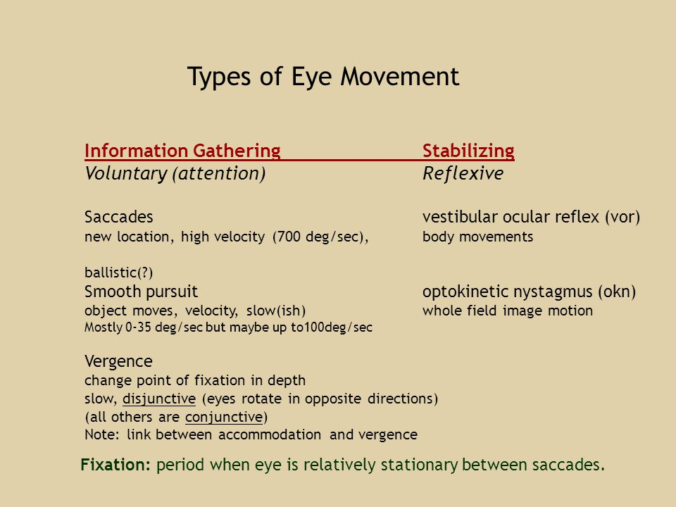 Types of Eye Movement Information GatheringStabilizing Voluntary (attention)Reflexive Saccadesvestibular ocular reflex (vor) new location, high velocity (700 deg/sec), body movements ballistic(?) Smooth pursuitoptokinetic nystagmus (okn) object moves, velocity, slow(ish) whole field image motion Mostly 0-35 deg/sec but maybe up to100deg/sec Vergence change point of fixation in depth slow, disjunctive (eyes rotate in opposite directions) (all others are conjunctive) Note: link between accommodation and vergence Fixation: period when eye is relatively stationary between saccades.