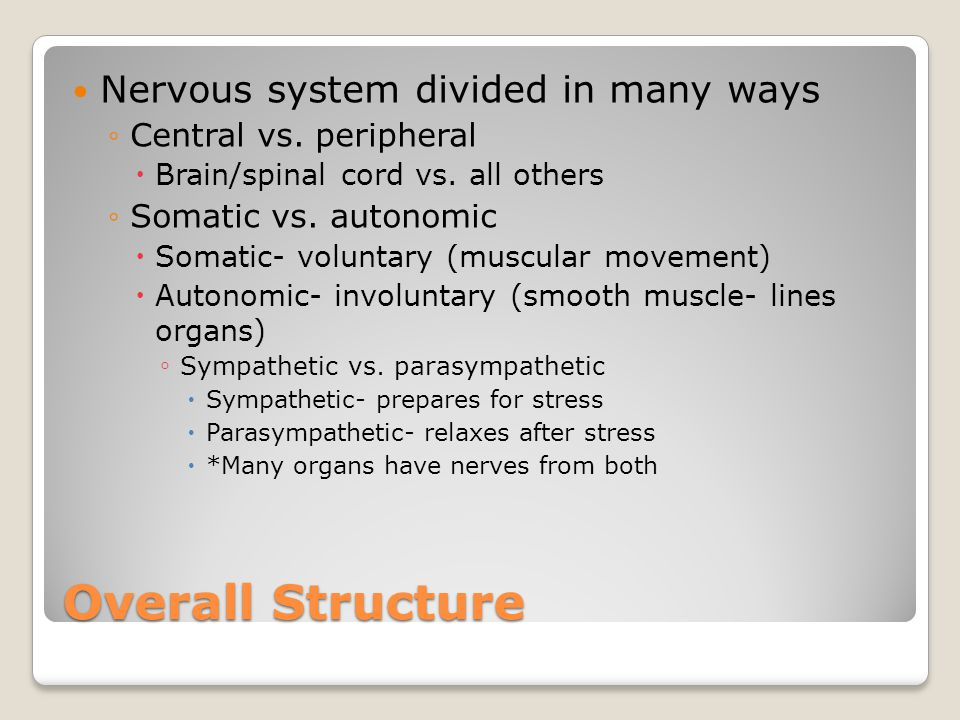 Overall Structure Nervous system divided in many ways ◦Central vs.