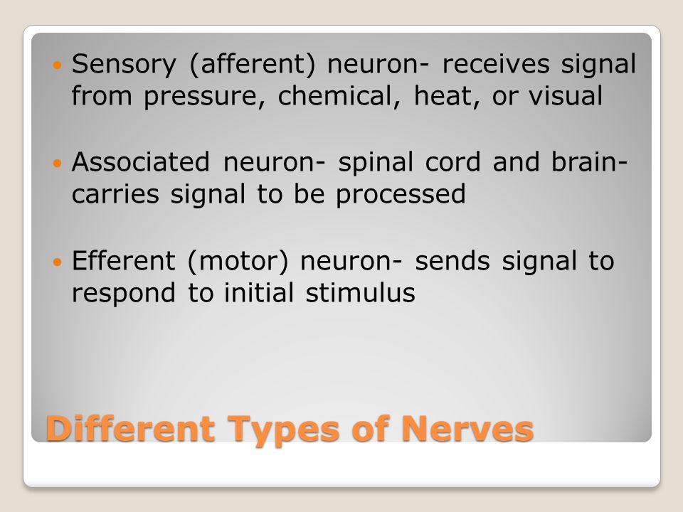 Different Types of Nerves Sensory (afferent) neuron- receives signal from pressure, chemical, heat, or visual Associated neuron- spinal cord and brain- carries signal to be processed Efferent (motor) neuron- sends signal to respond to initial stimulus
