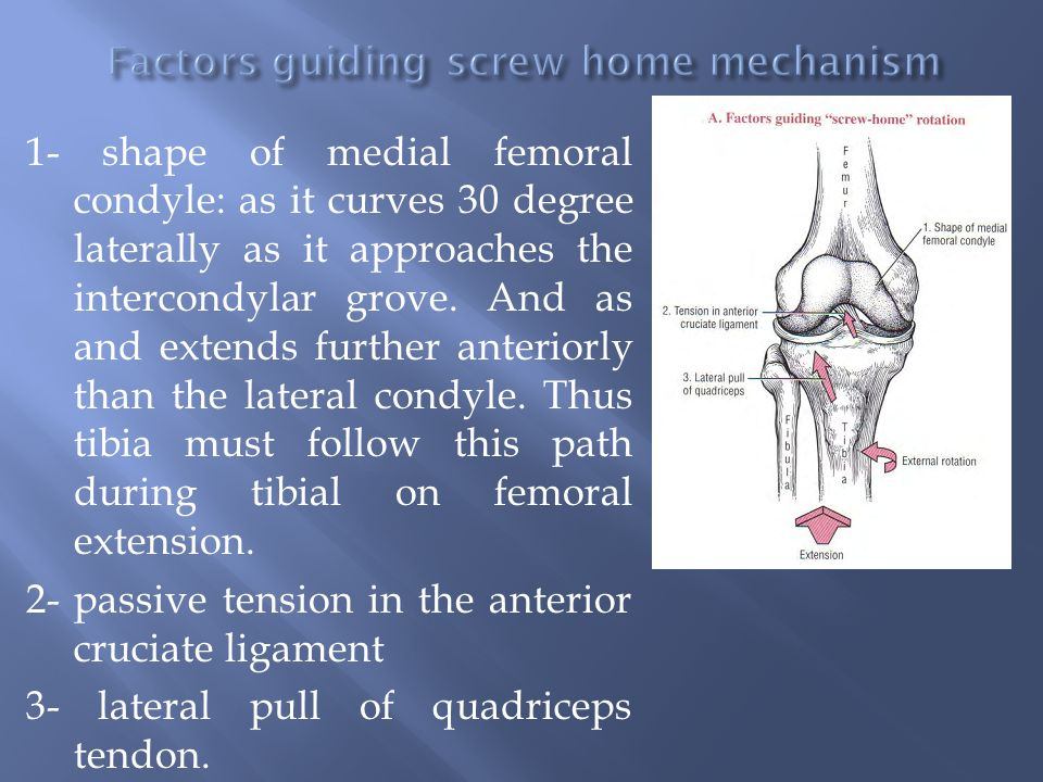 1- shape of medial femoral condyle: as it curves 30 degree laterally as it approaches the intercondylar grove. And as and extends further anteriorly t