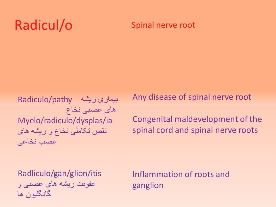 Radicul/o Spinal nerve root Radiculo/pathy بیماری ریشه های عصبی نخاع Myelo/radiculo/dysplas/ia نقص تکاملی نخاع و ریشه های عصب نخاعی Radliculo/gan/glio