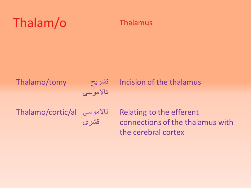 Thalam/o Thalamus Thalamo/tomy تشریح تالاموسی Thalamo/cortic/al تالاموسی قشری Incision of the thalamus Relating to the efferent connections of the thalamus with the cerebral cortex