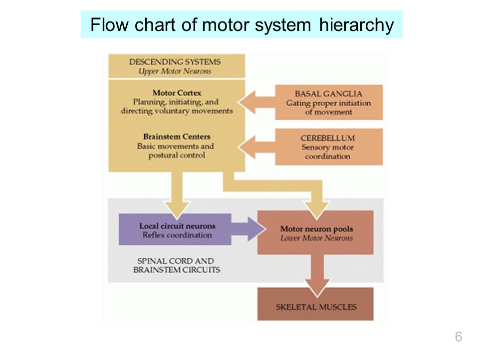 Flow chart of motor system hierarchy 6
