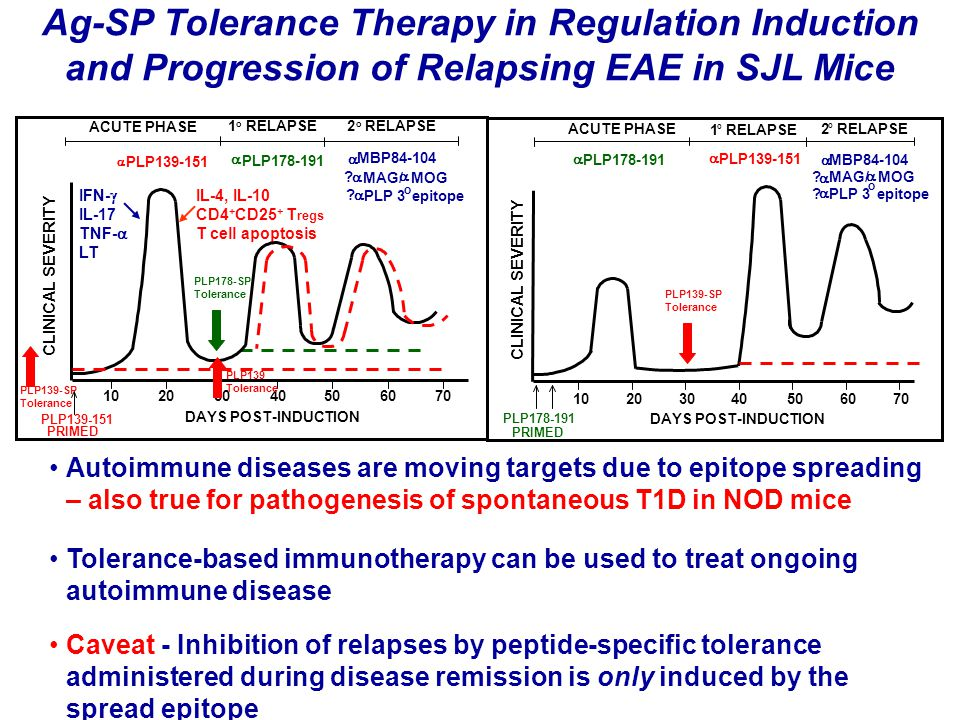 PLP178-SP Tolerance IL-4, IL-10 CD4 + CD25 + T regs T cell apoptosis DAYS POST-INDUCTION ACUTE PHASE 1 o RELAPSE2 o 102050406070 PLP139-151 PRIMED  PLP139-151  PLP178-191  MBP84-104 .