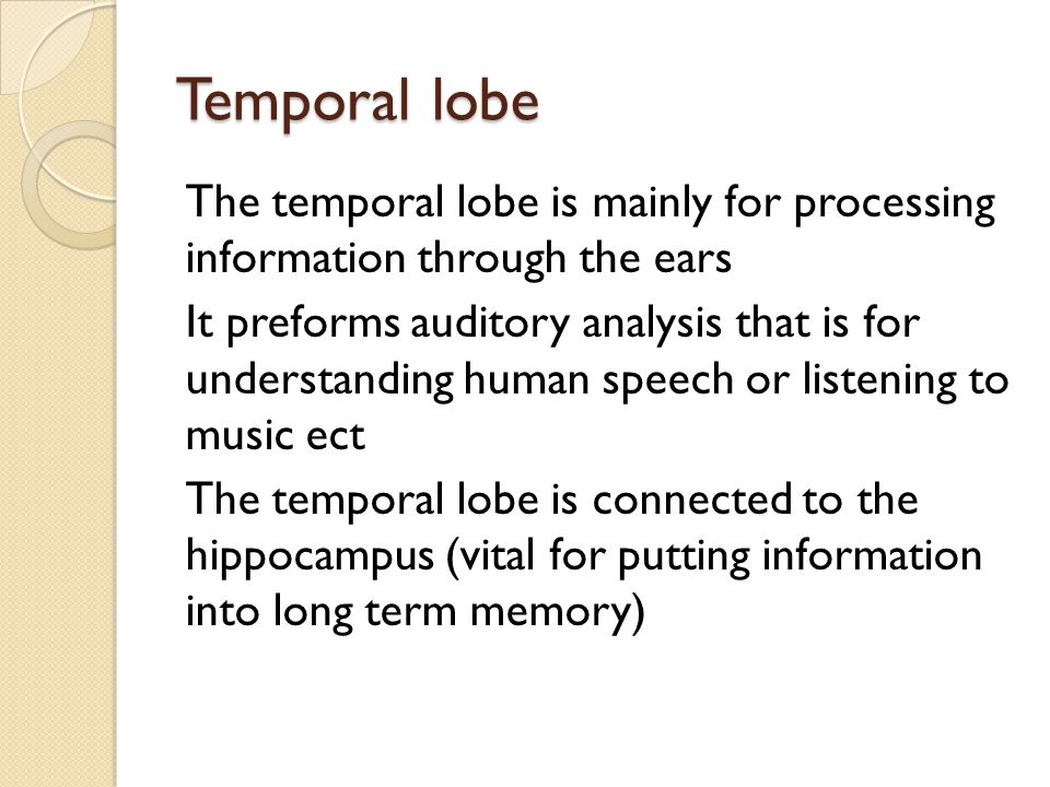Temporal lobe The temporal lobe is mainly for processing information through the ears It preforms auditory analysis that is for understanding human speech or listening to music ect The temporal lobe is connected to the hippocampus (vital for putting information into long term memory)