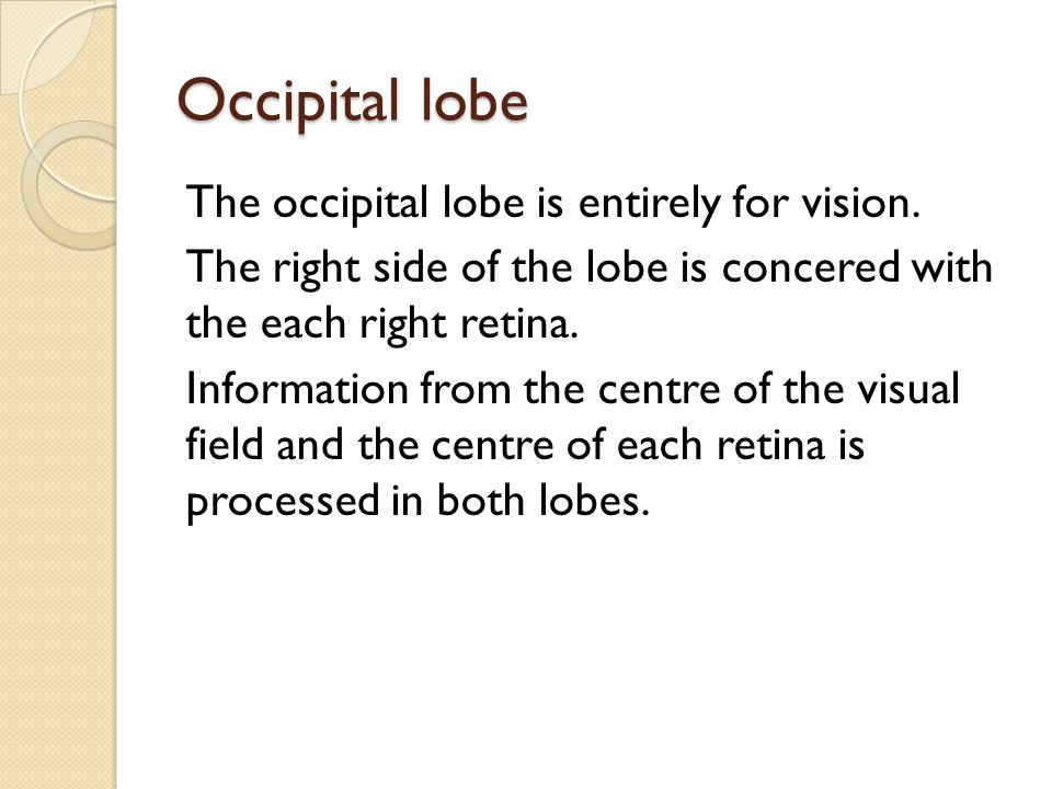 Occipital lobe The occipital lobe is entirely for vision. The right side of the lobe is concered with the each right retina. Information from the cent