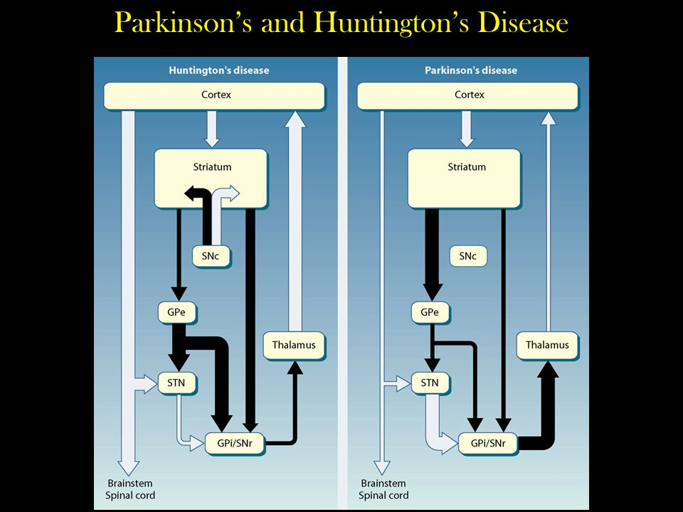 Parkinson's and Huntington's Disease