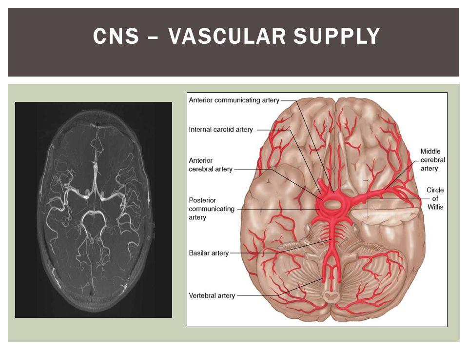 CNS – VASCULAR SUPPLY