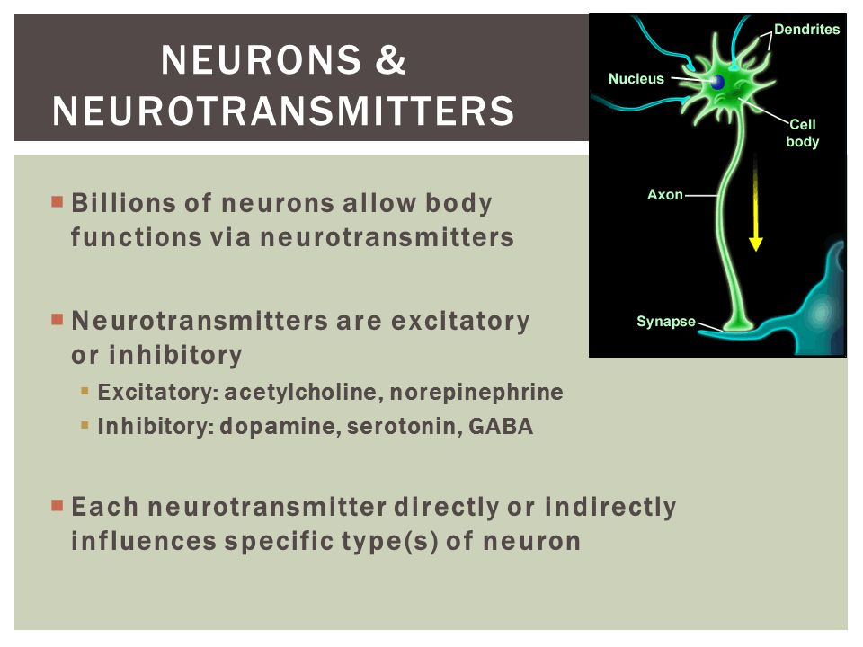  Nerve impulse travels from neuron through axon to terminal & synaptic knob  Synaptic knob communicates with dendrite of neighbor neuron via neurovesicles that store & release neurotransmitters into synapse  If stimulated in a lock & key manner, the next neuron picks up & continues the impulse  Seizures: continuous release / stimulation of impulses = spasm  Botulism: neurotransmitters bound so no impulses = flaccidity NEURONS & NEUROTRANSMITTERS