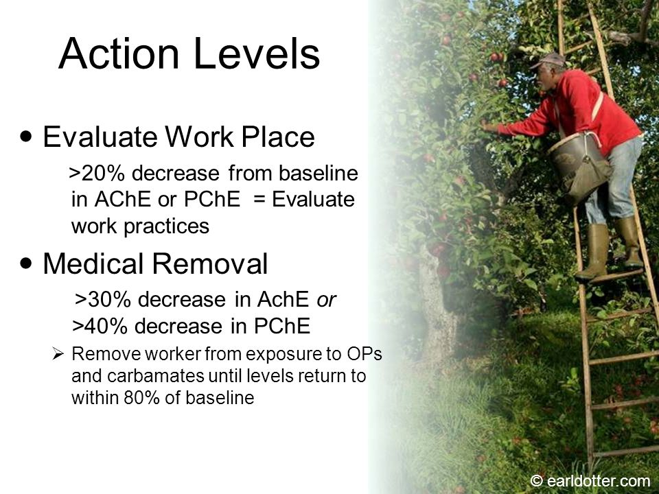 Action Levels Evaluate Work Place >20% decrease from baseline in AChE or PChE = Evaluate work practices Medical Removal >30% decrease in AchE or >40% decrease in PChE  Remove worker from exposure to OPs and carbamates until levels return to within 80% of baseline © earldotter.com