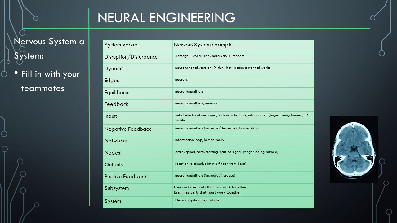 NEURAL ENGINEERING Nervous System a System: Fill in with your teammates System VocabNervous System example Disruption/Disturbance damage – concussion,