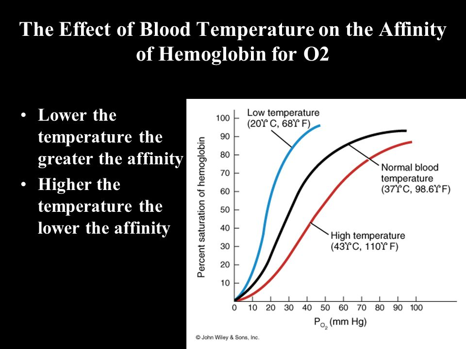 The Effect of Blood Temperature on the Affinity of Hemoglobin for O2 Lower the temperature the greater the affinity Higher the temperature the lower t