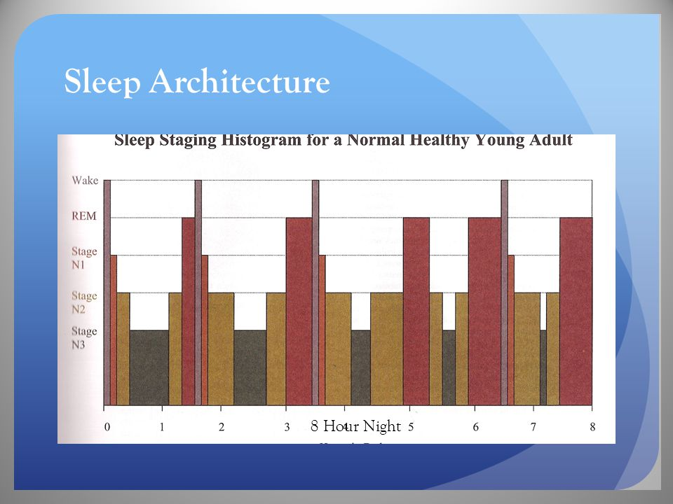 Sleep Architecture 8 Hour Night