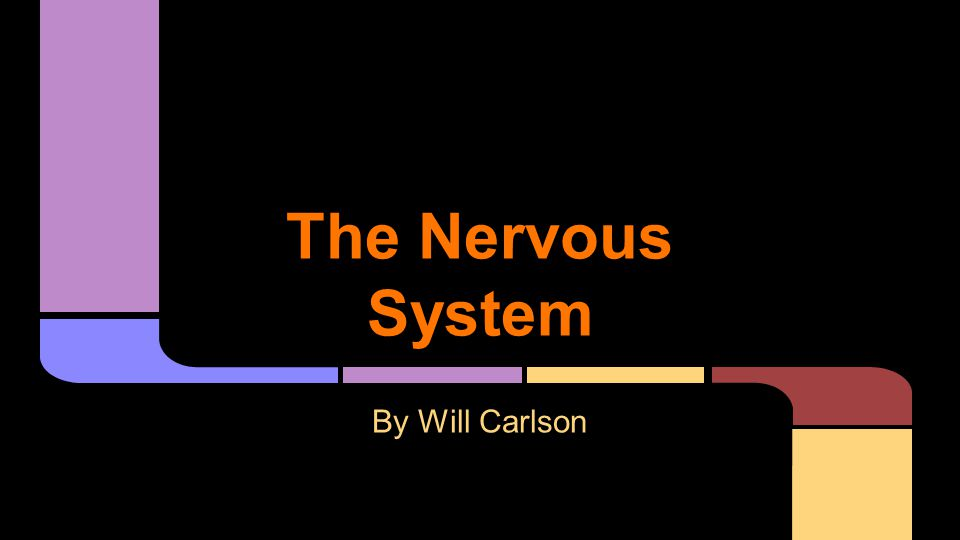 The Nervous System By Will Carlson