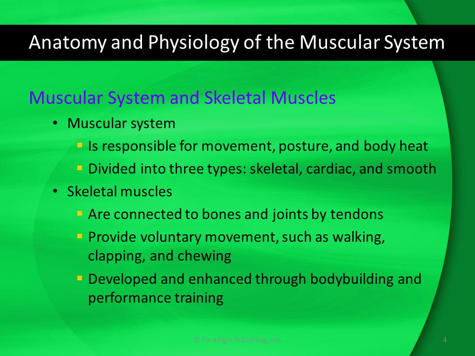 Anatomy and Physiology of the Muscular System Muscular System and Skeletal Muscles Muscular system  Is responsible for movement, posture, and body heat  Divided into three types: skeletal, cardiac, and smooth Skeletal muscles  Are connected to bones and joints by tendons  Provide voluntary movement, such as walking, clapping, and chewing  Developed and enhanced through bodybuilding and performance training 4© Paradigm Publishing, Inc.
