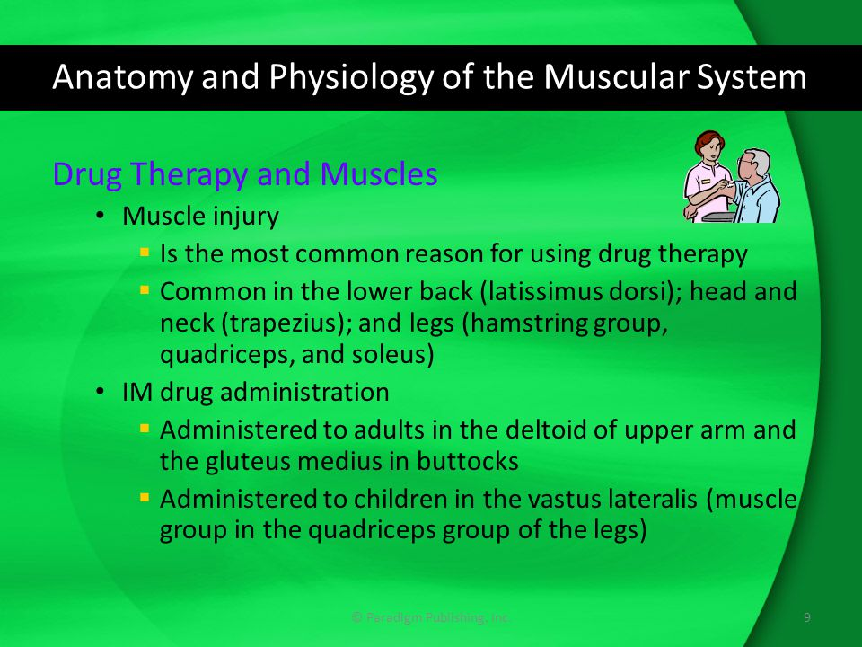 Anatomy and Physiology of the Muscular System Drug Therapy and Muscles Muscle injury  Is the most common reason for using drug therapy  Common in the lower back (latissimus dorsi); head and neck (trapezius); and legs (hamstring group, quadriceps, and soleus) IM drug administration  Administered to adults in the deltoid of upper arm and the gluteus medius in buttocks  Administered to children in the vastus lateralis (muscle group in the quadriceps group of the legs) 9© Paradigm Publishing, Inc.
